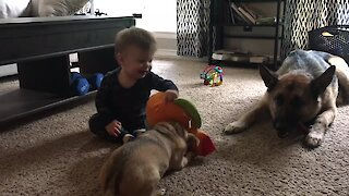 Baby & dog play hilariously adorable game of tug-of-war