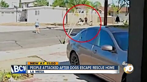 People attacked after dogs escape La Mesa rescue home
