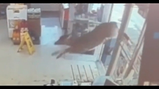 Deer Run Inside Gas Station - Video
