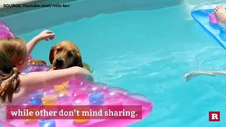 Poolside Pups | Rare Animals - Video
