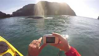 Gray Whale Surprises Paddlers off the Coast of Oregon - Video