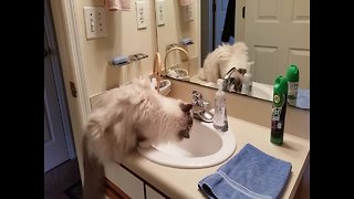 Cat gets Excited to Drink from the Sink