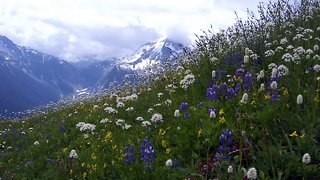 Spring Arrives Earlier Every Year, And It's Altering Whole Ecosystems - Video