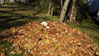 15 Dogs Enjoying The First Day Of Fall - Video