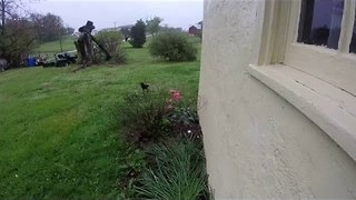 GoPro Camera Catches Master Egg Thief in Action - Video