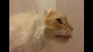 Here's Kitty! Cat Rips Through Shower Curtain to Get to Water