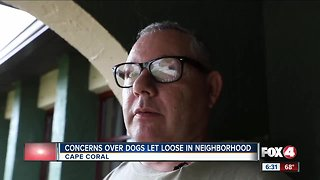 Concerns over dogs let loose in neighborhood