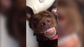 Dog's Big Belly Rub Smile - Video