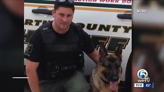Martin County Sheriff's Office K-9 Kaspar recovering from surgery - Video