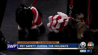 Pet emergencies during the holidays