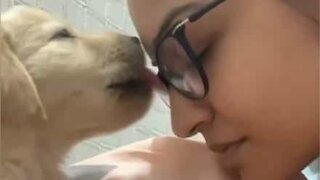 Puppy reciprocates owner's kisses