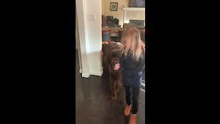 Little girl refuses to leave her giant puppy for school