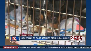 More than 50 dogs rescued from rural home