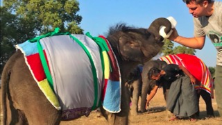 Orphan Elephants Get Homemade Blankets During Myanmar Cold Snap - Video
