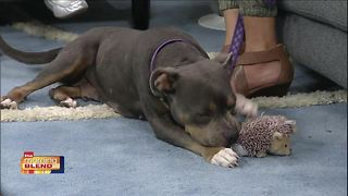 Gulf Coast Humane Society - Video