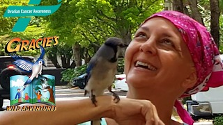 A cancer survivor's guardian angel, Gracie the wild Blue Jay, comes for a visit - Video