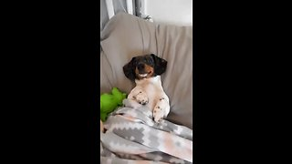 Dog suffering from crate anxiety gets luxurious upgrade