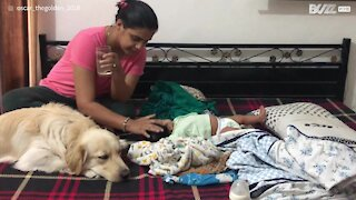 Dog can't hide jealousy towards new baby!