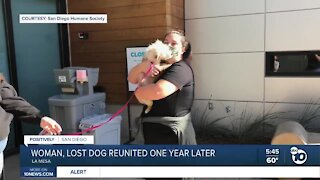 Woman, lost dog reunited one year later