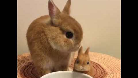 Adorable Bunny Has a Munch With Mini-Me Doll