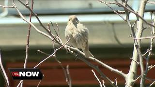 Birds migrate through SE Wisconsin - Video