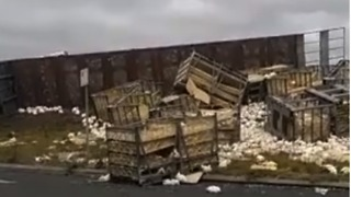 Truck Carrying Thousands of Chickens Crashes on Victoria Highway - Video