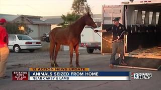 13 horses and hundreds of other animals seized from home - Video