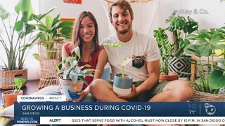 San Diego entrepreneurs start plant delivery business during COVID-19 pandemic