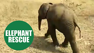 Heartwarming moment an entire village united to haul a trapped baby elephant from a 20ft well - Video