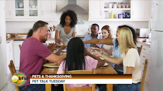 PET TALK TUESDAY - THANKSGIVING AND PETS