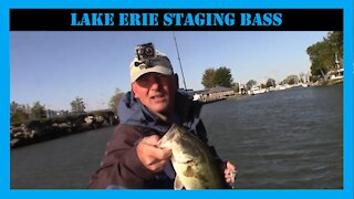 Lake Erie Staging Bass Where to Find Them