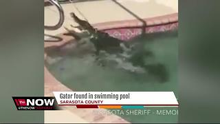 VIDEO: Alligator removed from Sarasota Co. pool