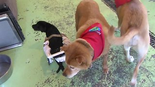 Miami County animal sanctuary offers second chance for senior dogs