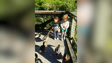 Funny Tot Girl Freaks Over Some Hungry Ducks