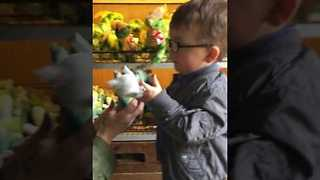 Noel Goes Dinosaur Shopping - Video