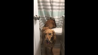 Water-Loving Pup Tries To Join Owner During Shower