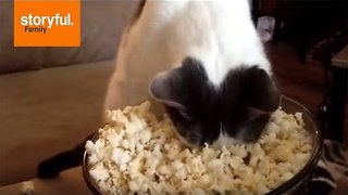 Canines Versus Cats: Which Species Is Brighter? - Video