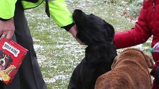 Ashland County Sheriff's Office saves family dog trapped on thin ice - Video