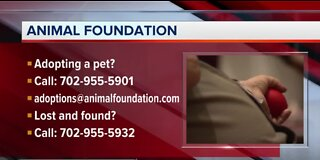 Appointments at Animal Foundation