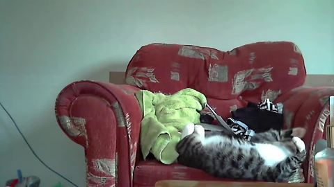 Sleepy cat accidentally wipes out