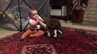 Baby Girl And Labradoodle Fight Over A Stuffed Rabbit - Video