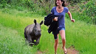 'Nandi' the orphaned rhino baby is given a bright future - Video