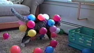 These Cats & Dogs Are Obsessed With Balloons!! - Video