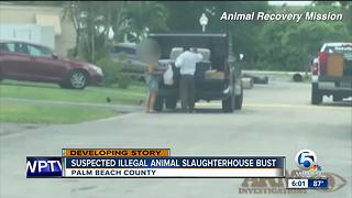 Three people arrested in connection with illegal slaughterhouse in Loxahatchee: Sheriff - Video