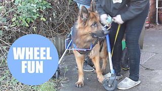 Dog unable to walk after being stamped on has new lease of life - Video
