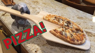 Einstein the Parrot serves delicious pizza