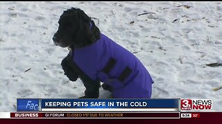 Pet owners urged to keep close eye on furry friends during arctic blast