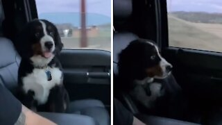 Precious little puppy is afraid of bridges during car ride