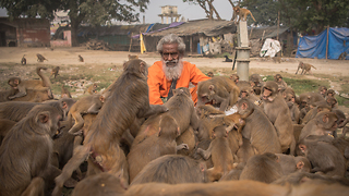 'Monkey Man' Feeds Hundreds Of Primates Every Day - Video
