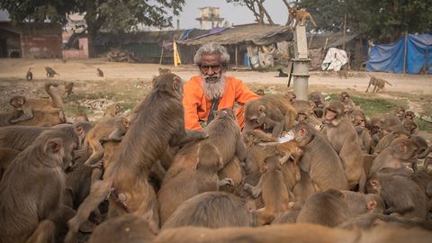 'Monkey Man' Feeds Hundreds Of Primates Every Day